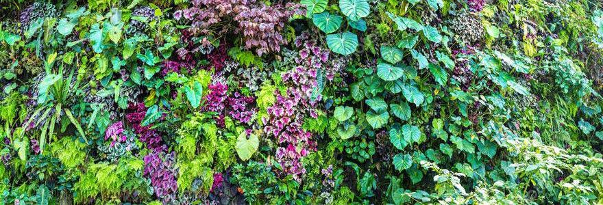 Conception et installation de murs végétaux