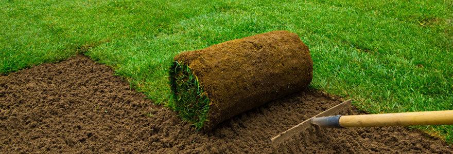 acheter du gazon naturel en rouleaux pour le jardin